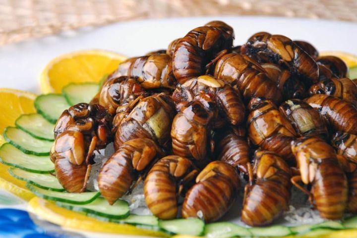 Насекомые являются предпочтительным источником пищи для многих животных