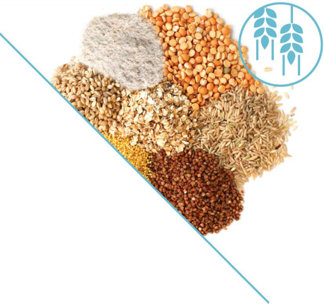 grain flour export