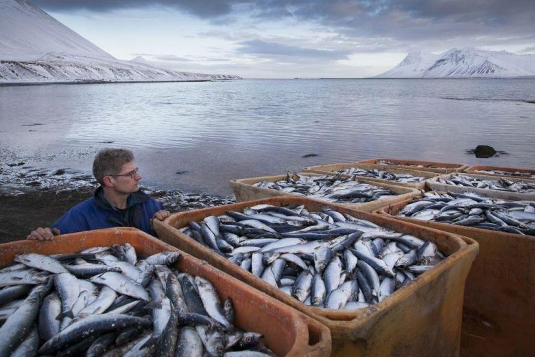 как купить лицензию на рыбалку в исландии