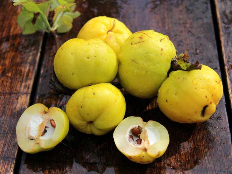 черноплодная рябина снижает холестерин