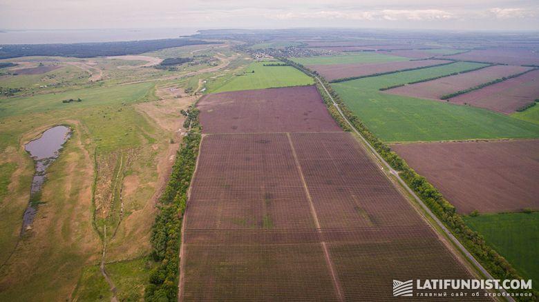 По данным экспертов, на сегодня иностранный капитал контролирует 2,4 млн га сельскохозяйственных земель Украины
