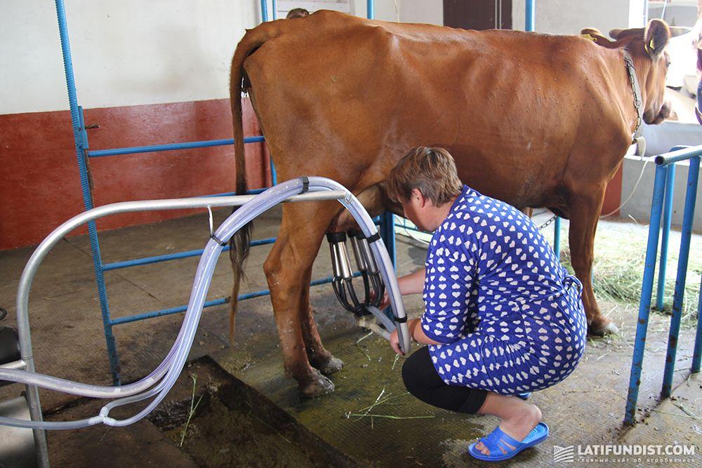 Компания «Данон» развивает и молочные кооперативы, и семейные фермы
