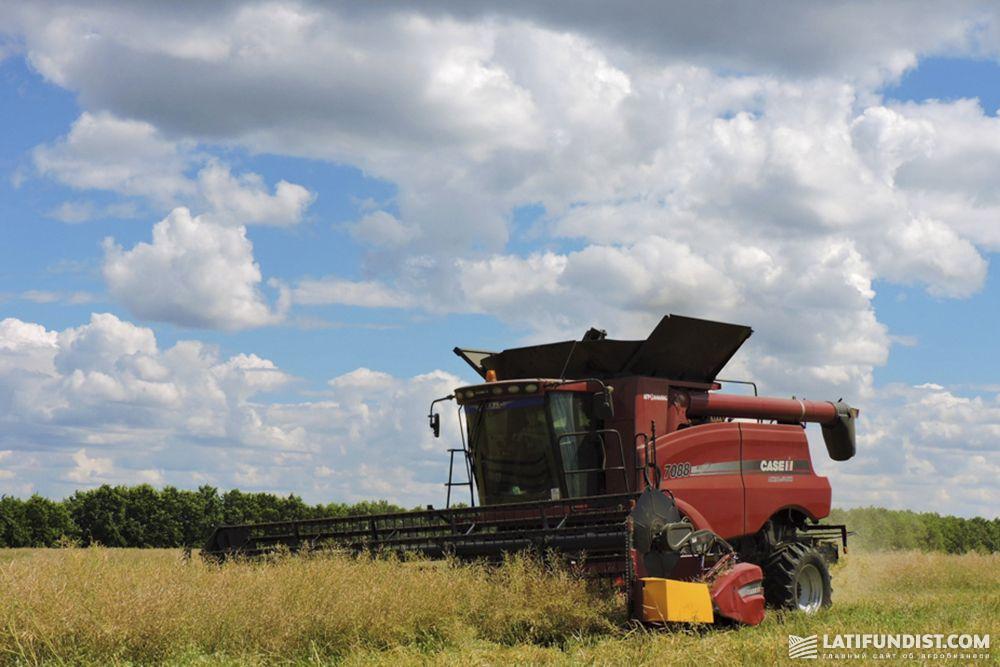 Жатва рапса в Agricom Group