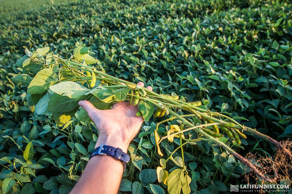 технология выращивания сои в украине вообще половина
