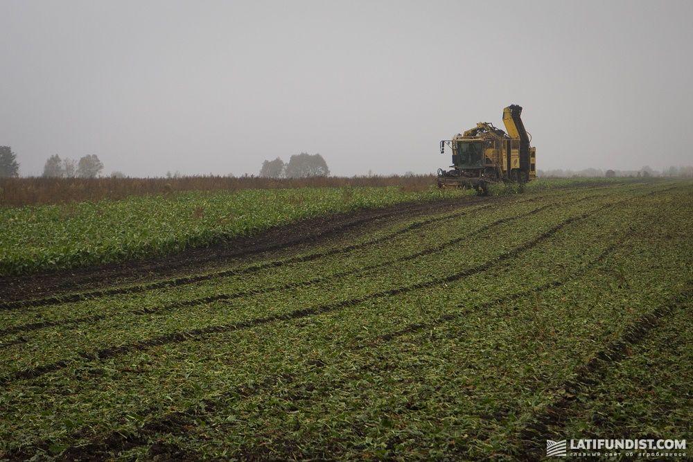Сбор урожая сахарной свеклы на поле «Агро ЛВ Лимитед»