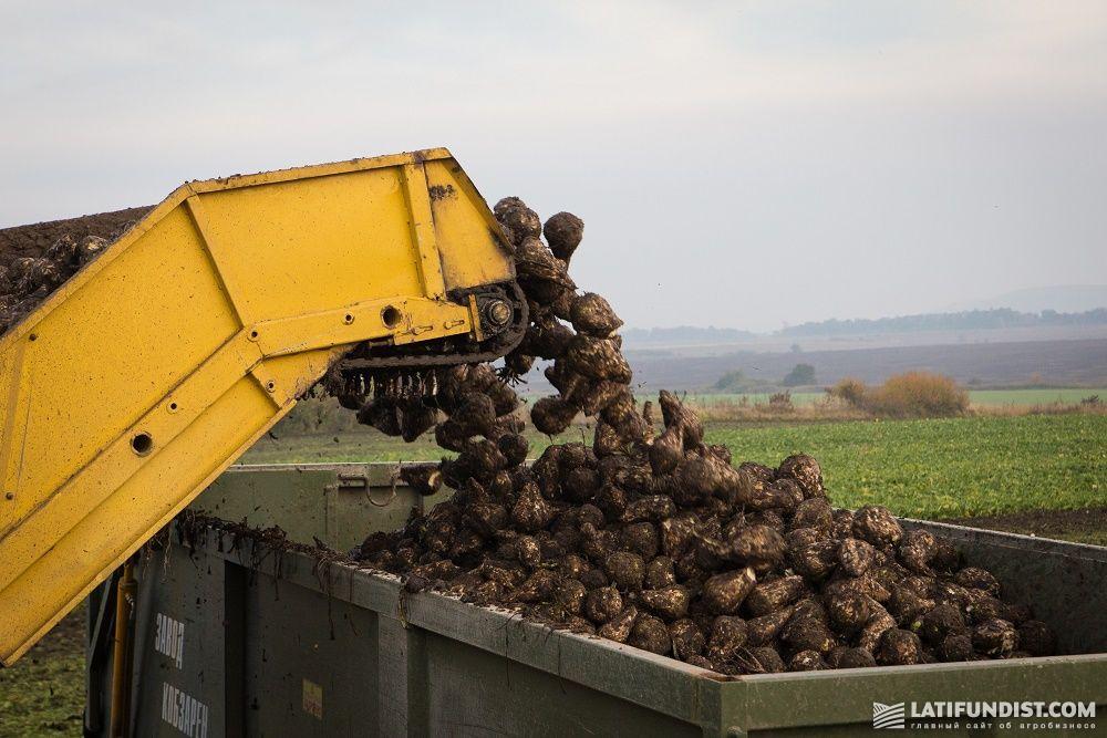 Сбор урожая сахарной свеклы на поле «Захидный Буг»
