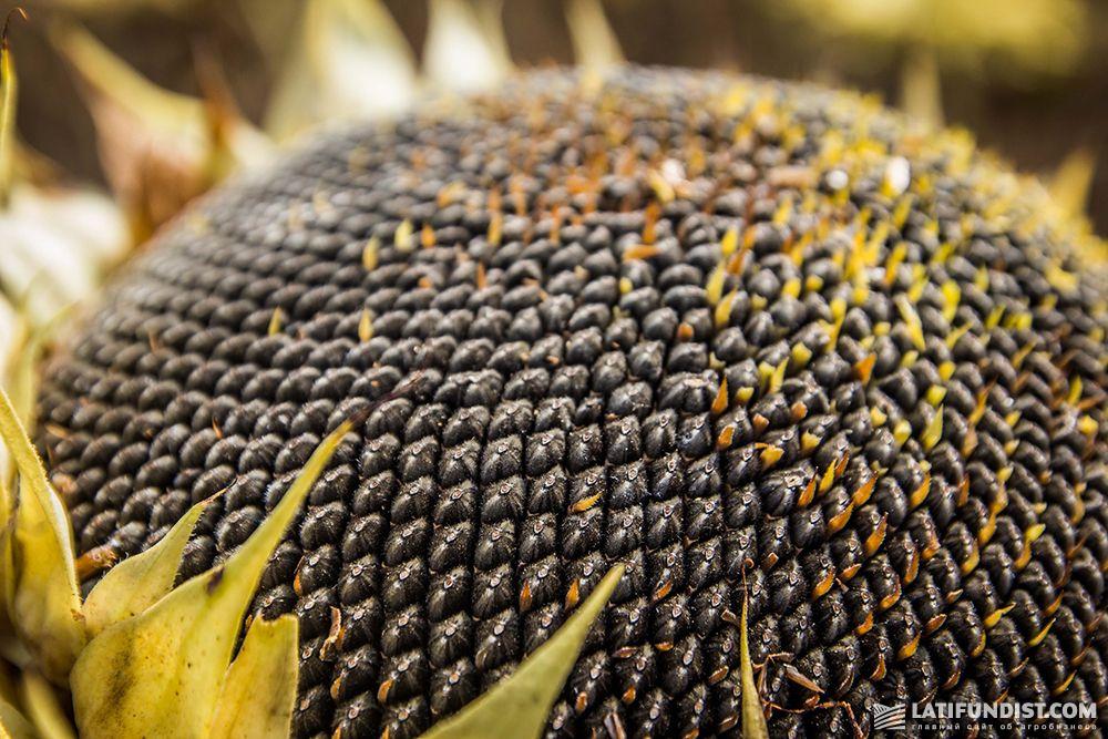 Среди основных импортируемых культур — семена подсолнечника