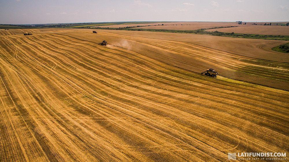 Harvesting campaign in Svarog West Group's fields