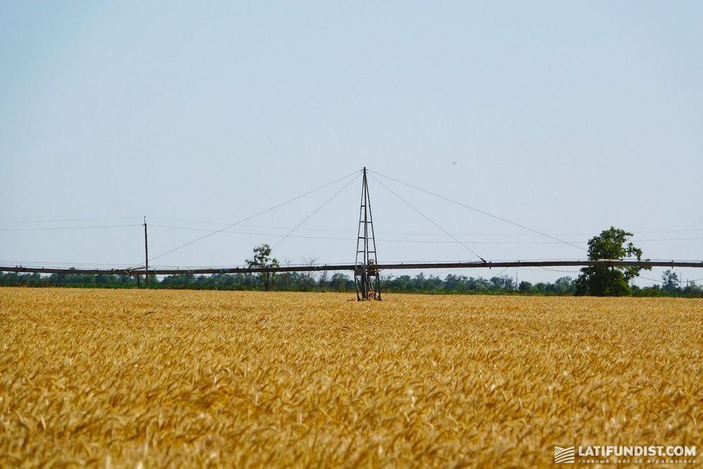 Орошение пшеничных полей