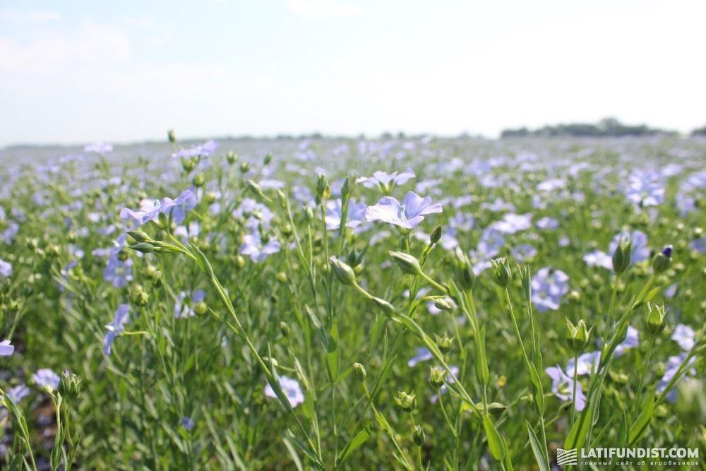 выращивание льна в ссср картинки наш