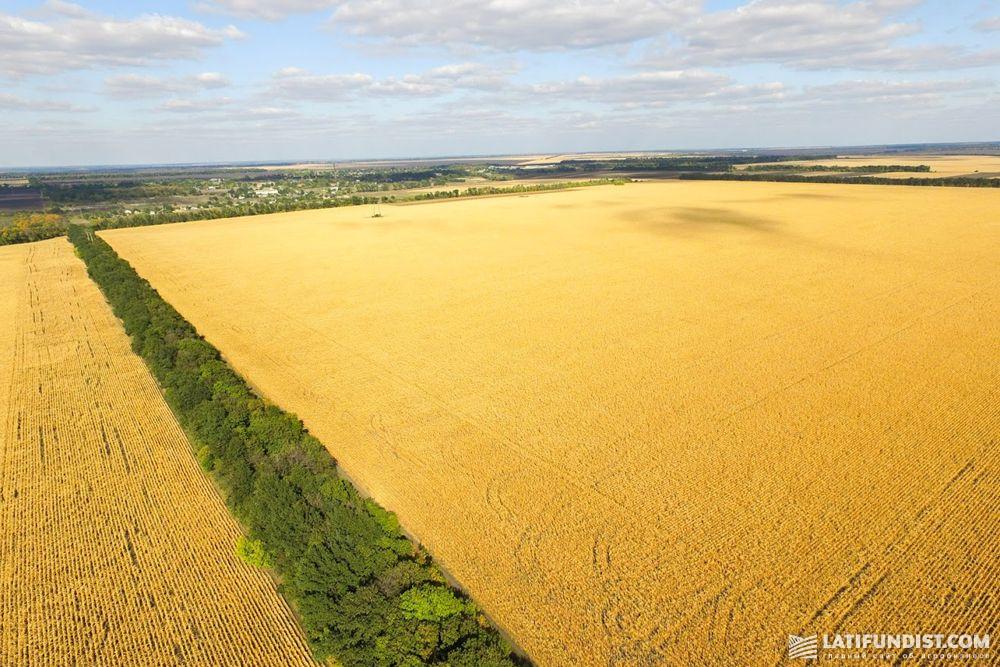 Кукурузные поля в Украине
