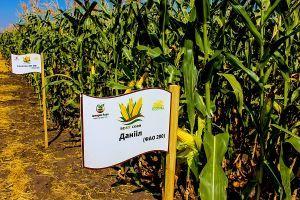 Империя-Агро внедряет семена селекционной кукурузы