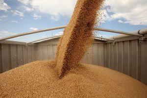 Трейдеры вынуждены включать риски в стоимость пшеницы, повышая цены предложения продукции на гостендерах Египта