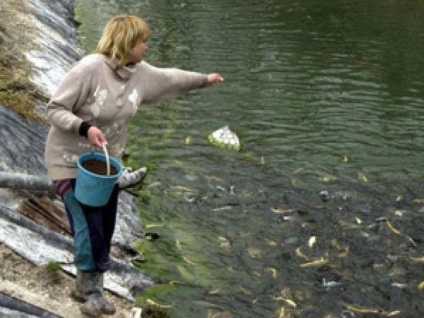 рыболовное хозяйство форель