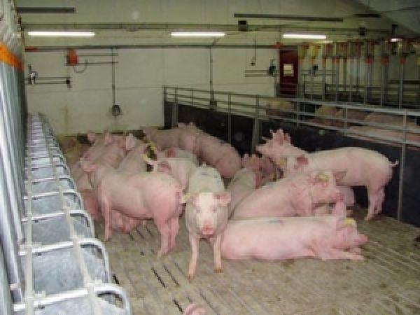 бэзрк белгранкорм ракитное выращиванию свиней вакансии тем при сохранении