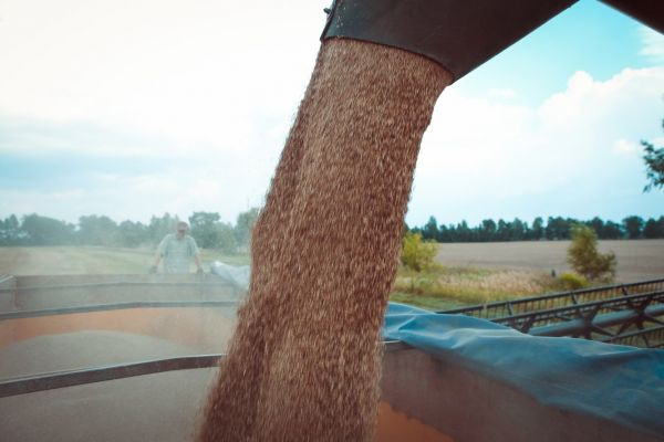 Grains harvesting in Ukraine