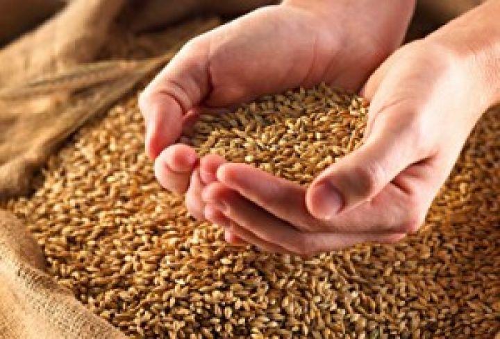 Запасы зерна на элеваторах фольксваген транспортер в спб купить новый