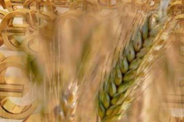 Цена на пшеницу в ростове на элеваторах система охлаждения двигателя транспортер т5