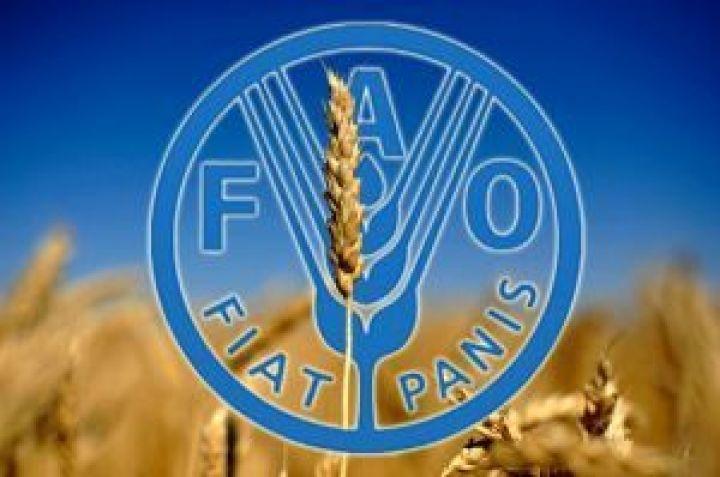 Предварительный прогноз ФАО по мировому рынку зерна благоприятен