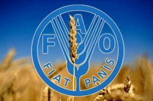 Цены на основные продовольственные товары в июле снизились , - ФАО