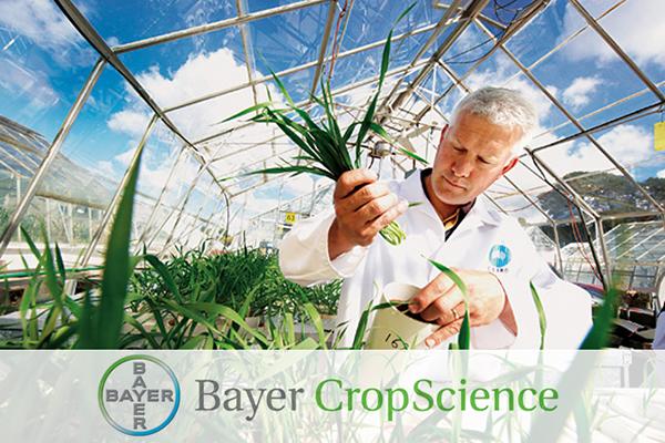Квартальная прибыль Bayer превысила прогнозы