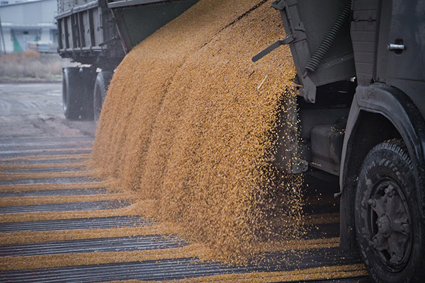Ставрополье готово представить собственный потенциал наВсемирном зерновом пленуме