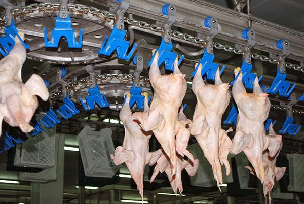 Вгосударстве Украина значительно уменьшилось производство говядины