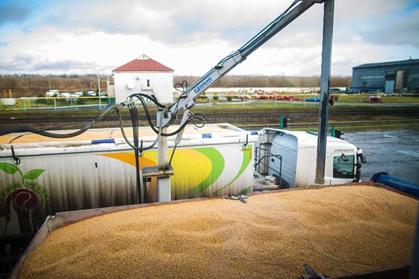 Украина увеличила объем экспорта пшеничной муки