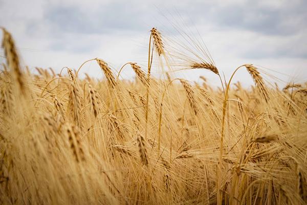 Производство сельхозпродукции вУкраинском государстве возросло на3%