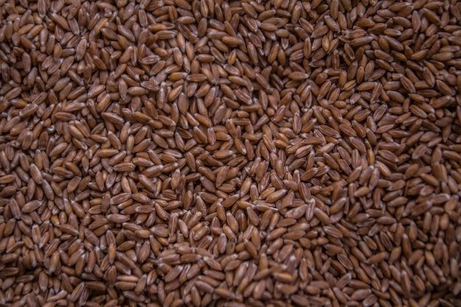 Сбор зерновых в РФ превысил 119 млн т