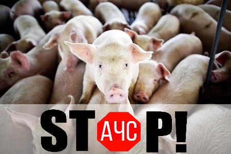 ВЭнгельсском районе отАЧС погибли свиньи