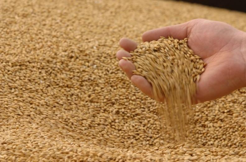Правительство выступает за продление нулевой экспортной пошлины на пшеницу