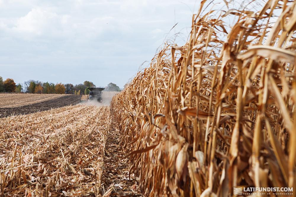 Fendt IDEAL harvesting corn in Ukraine