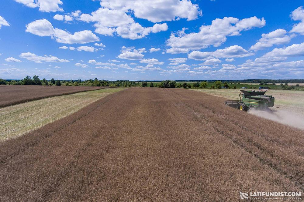 Rapeseed harvesting in Ukraine