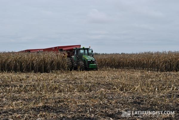трактор John Deere притаился в кукурузе