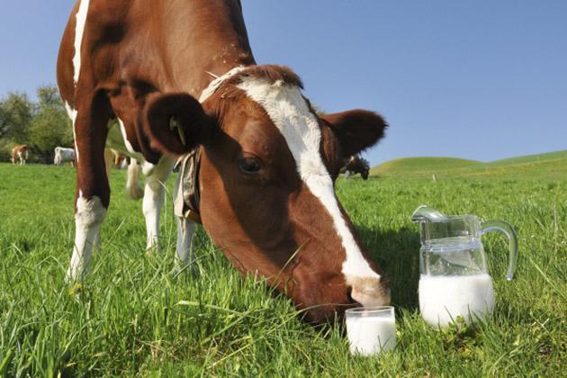 Корова на поле