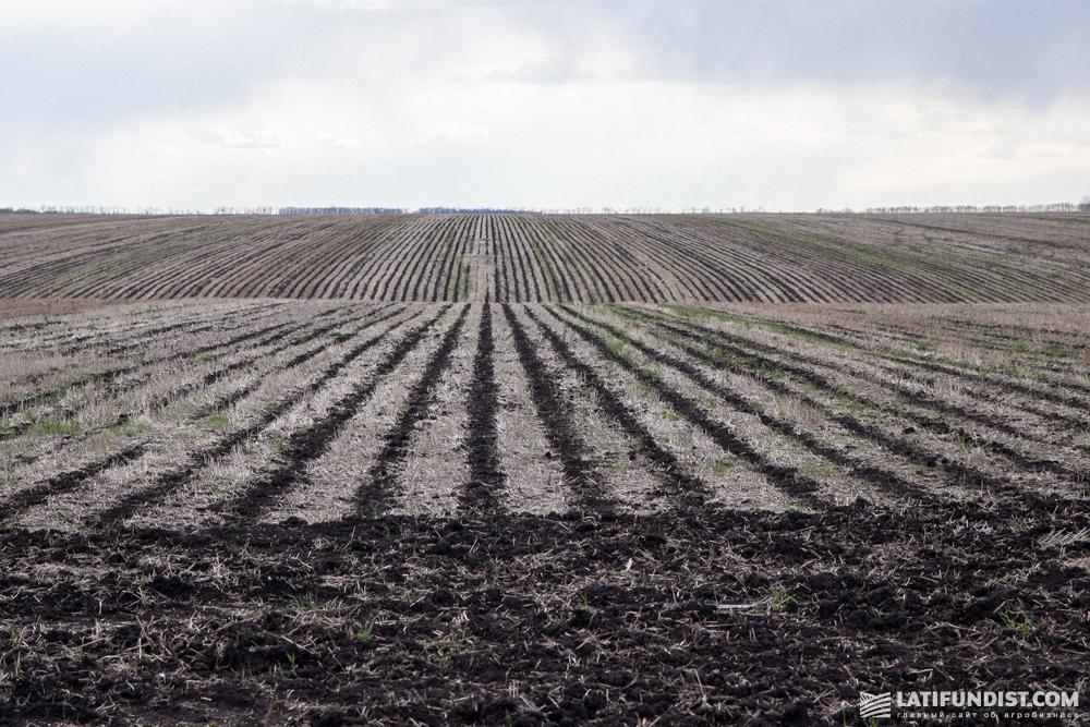 Благодаря технологиям no-till и strip-till почва живая и разрыхленная