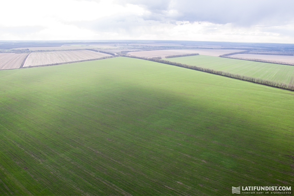 The fields of Trigon Farming Kharkiv, a subsidiary of Agromino