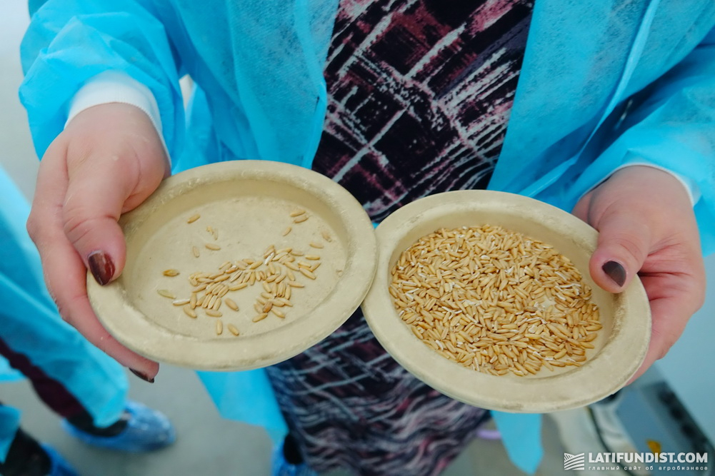 Пробы зерна с ультратриера