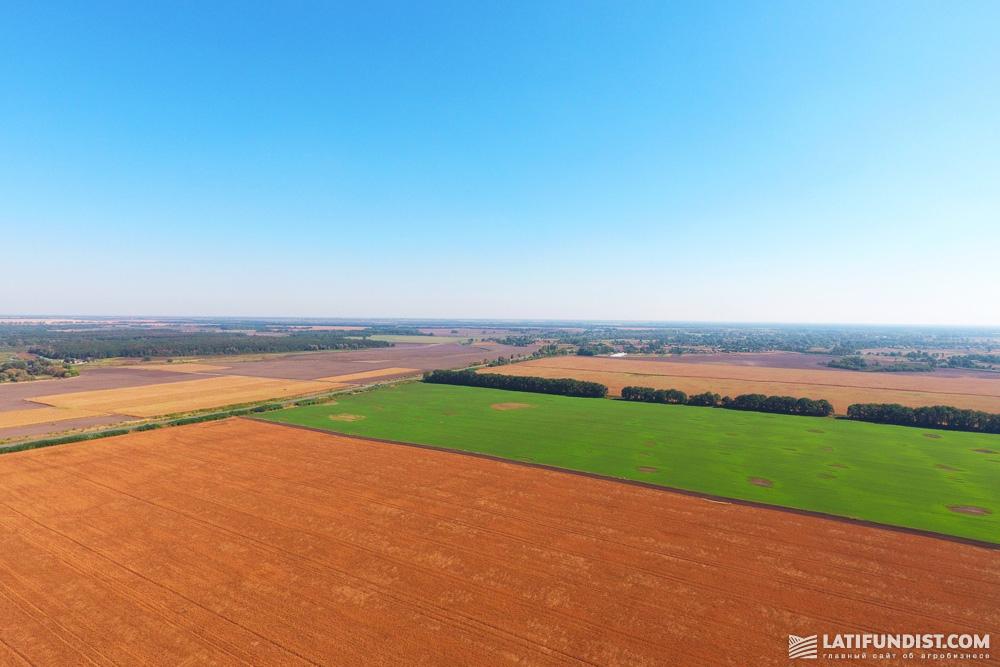 Кукурузные поля Украины