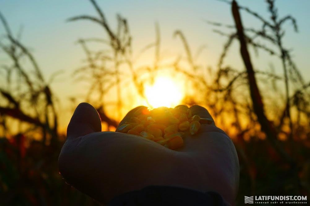 АгроЭкспедиция Кукуруза 2018