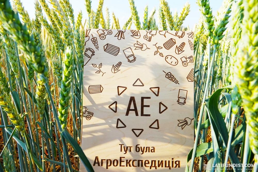 Состоянием пшеницы на поле остались довольны и наши эксперты.