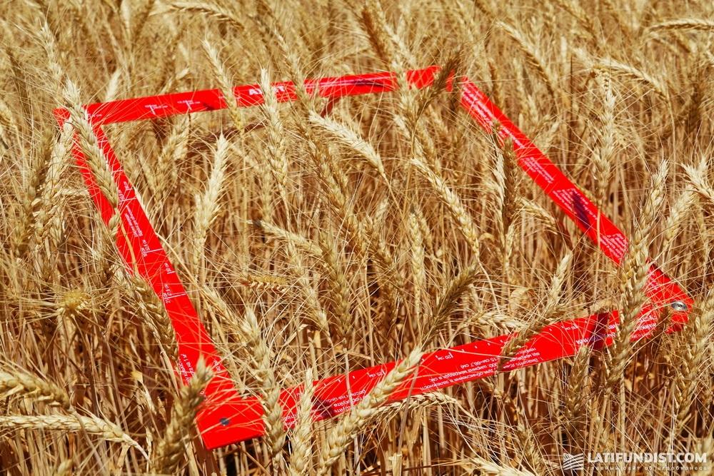 Рамка для измерения густоты посевов
