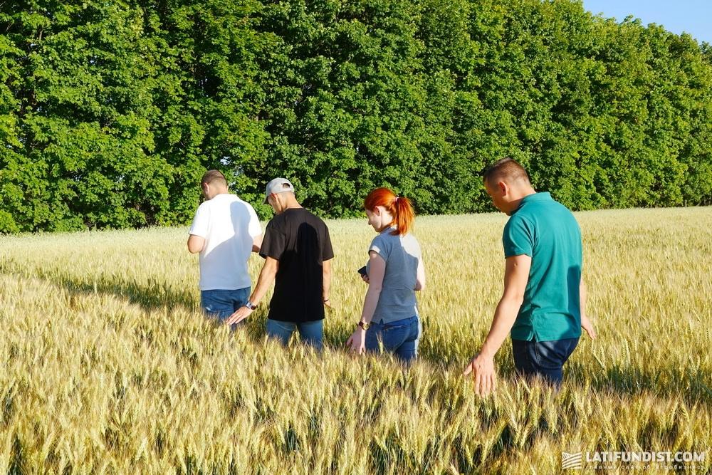 Пообщавшись с директором «Славутича», вся наша команда АгроЭкспедиции отправилась смотреть пшеничные посевы предприятия.