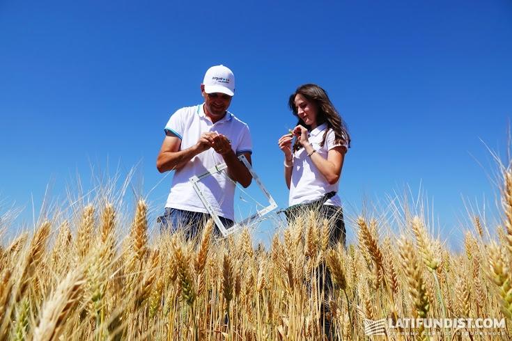 Участники АгроЭкспедиции изучают посевы пшеницы