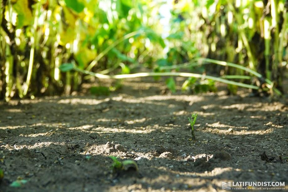 Почва после проведенных обработок