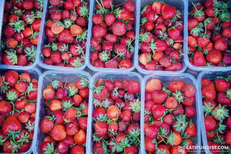 Увеличение числа операторов рынка произошло частично из-за роста за счет количества производителей-ягодников