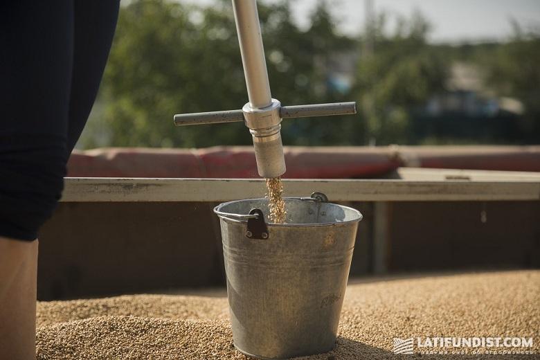 Отбор проб зерна