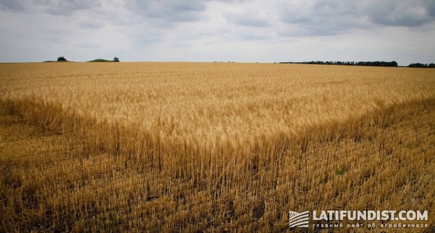 АгроЭкспедиция 8 — Пшеница 2015