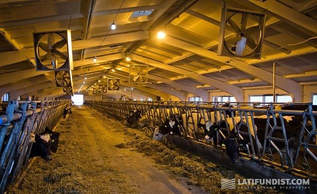 Содержание коров на предприятии «Витчизна»